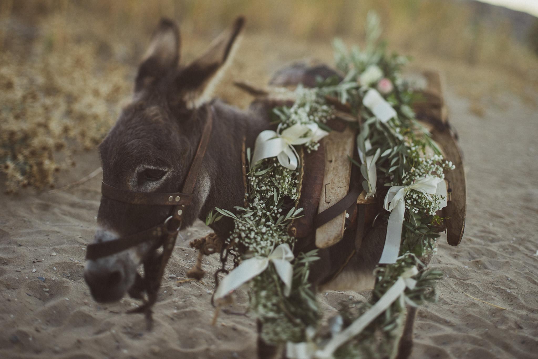 Donkey at wedding venue